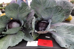 Giant Veg Facts Malvern Autumn Show